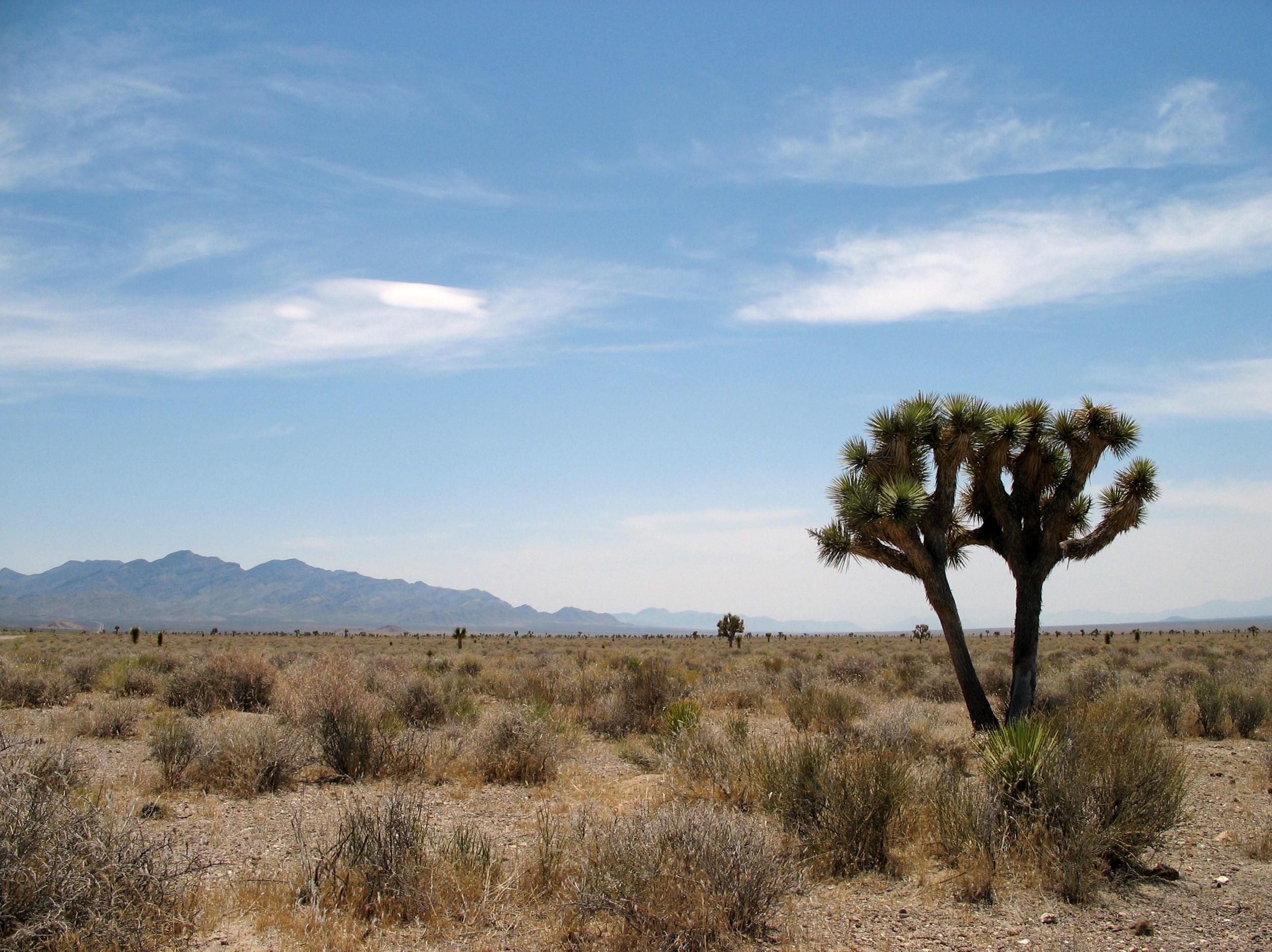 Basin and Range scenery near Rachel