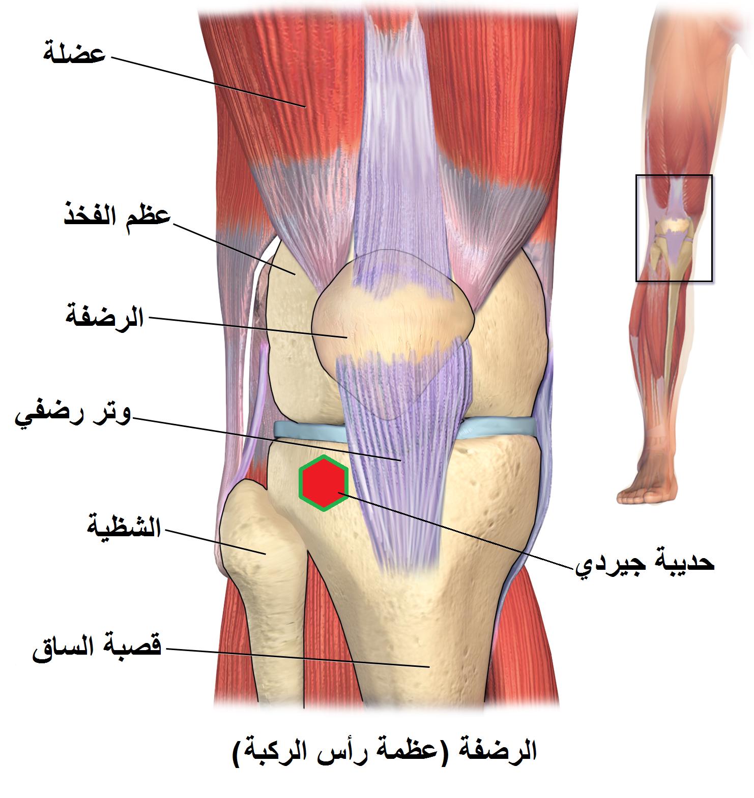 التكيف الصفحة الرئيسية معرض ألم الركبة اليمنى Sjvbca Org