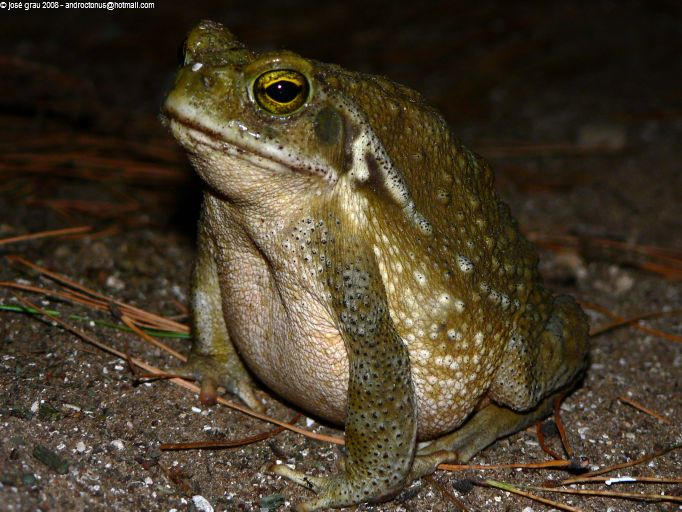 Image Result For Frog To Color