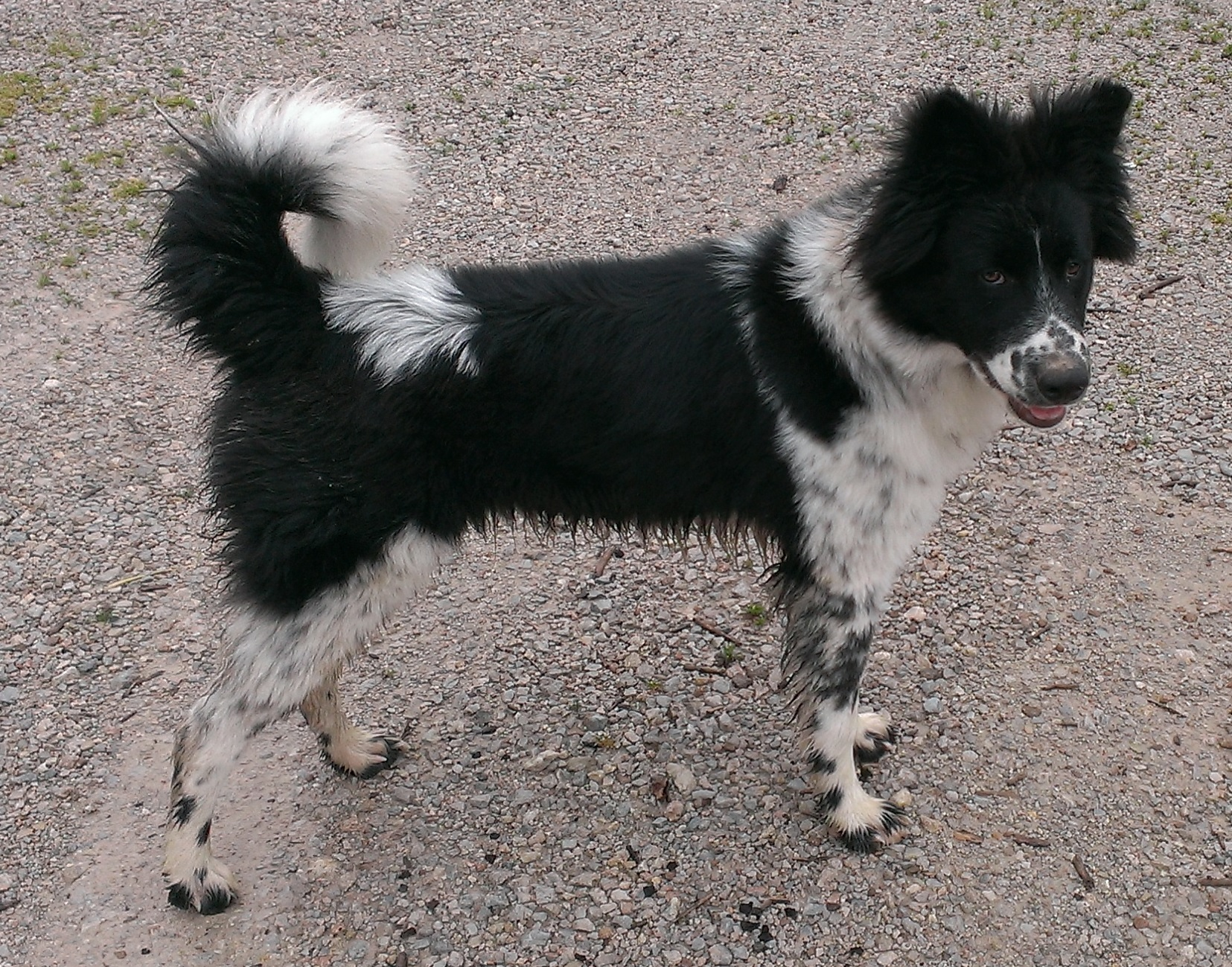 Help Identify My Puppy's Breed??? Please??? Help? - Page 3