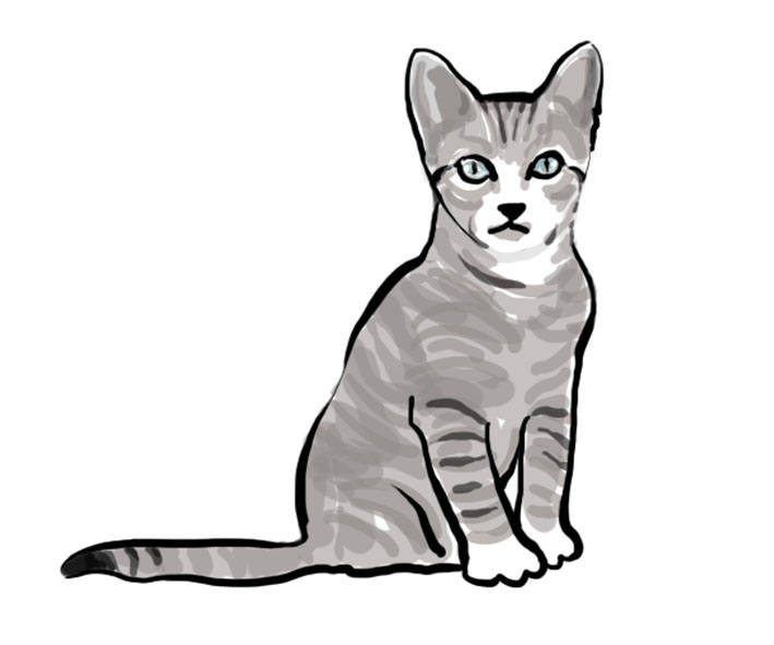 file cat illustration jpg wikimedia commons clip art of a cartoon van clipart of a cat claw