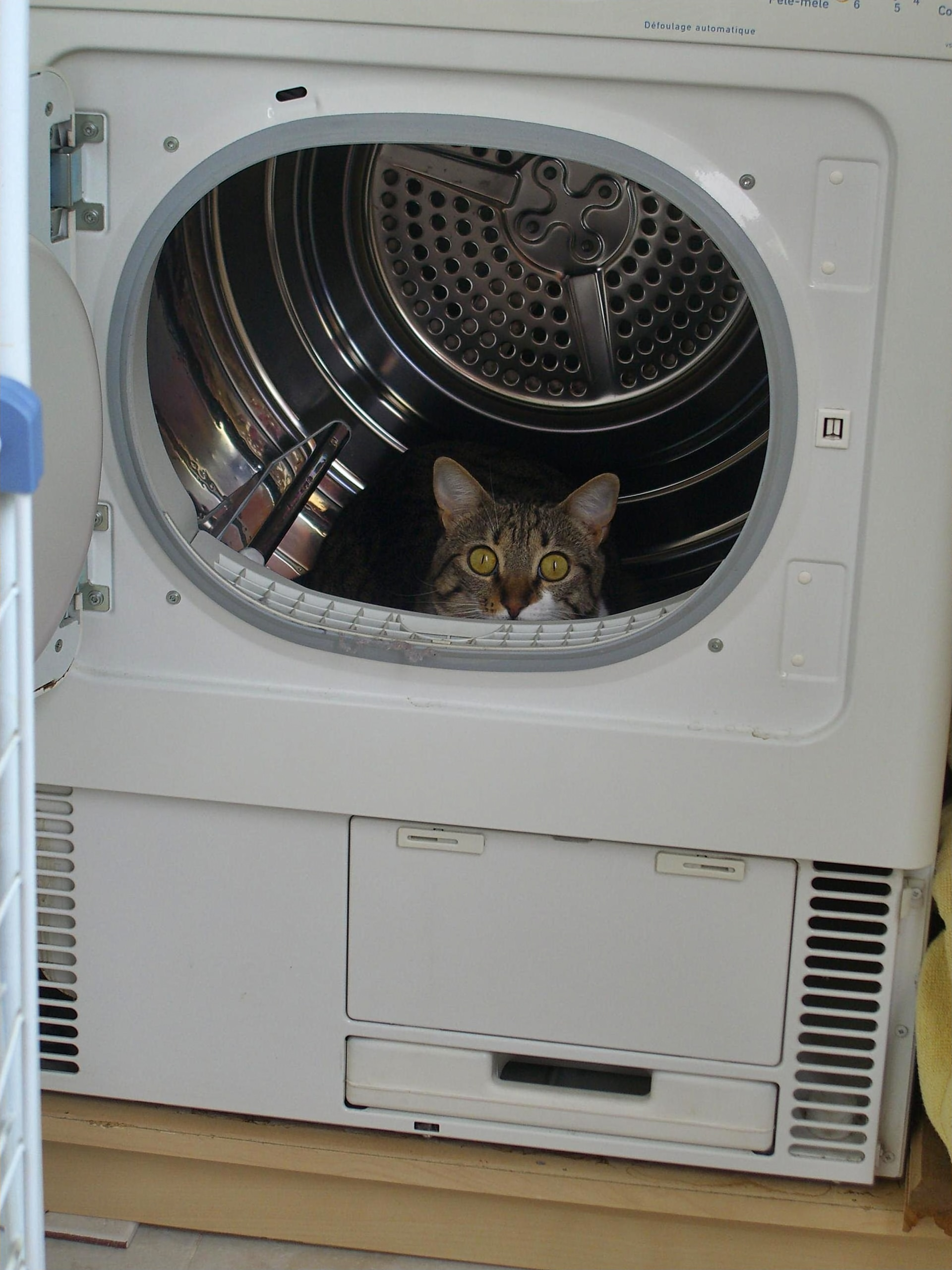 Brown cat in washing machine