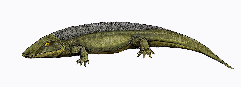 Depiction of Chroniosuchidae