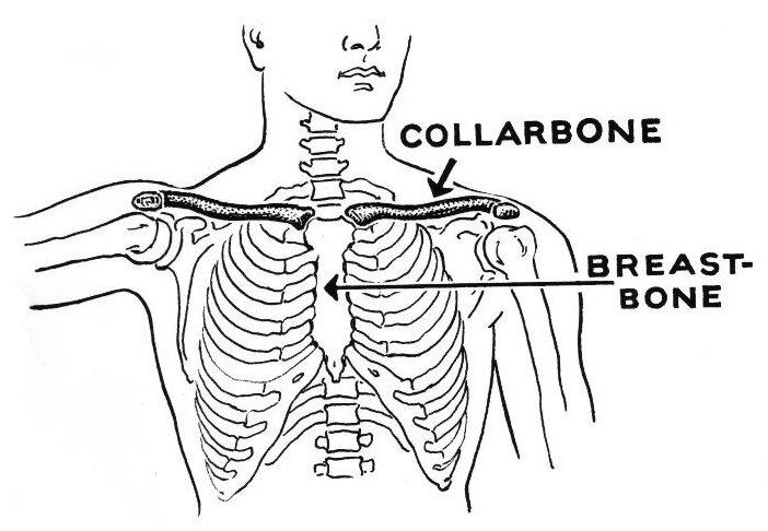 Broken Collar Bone Surgery Globehealer