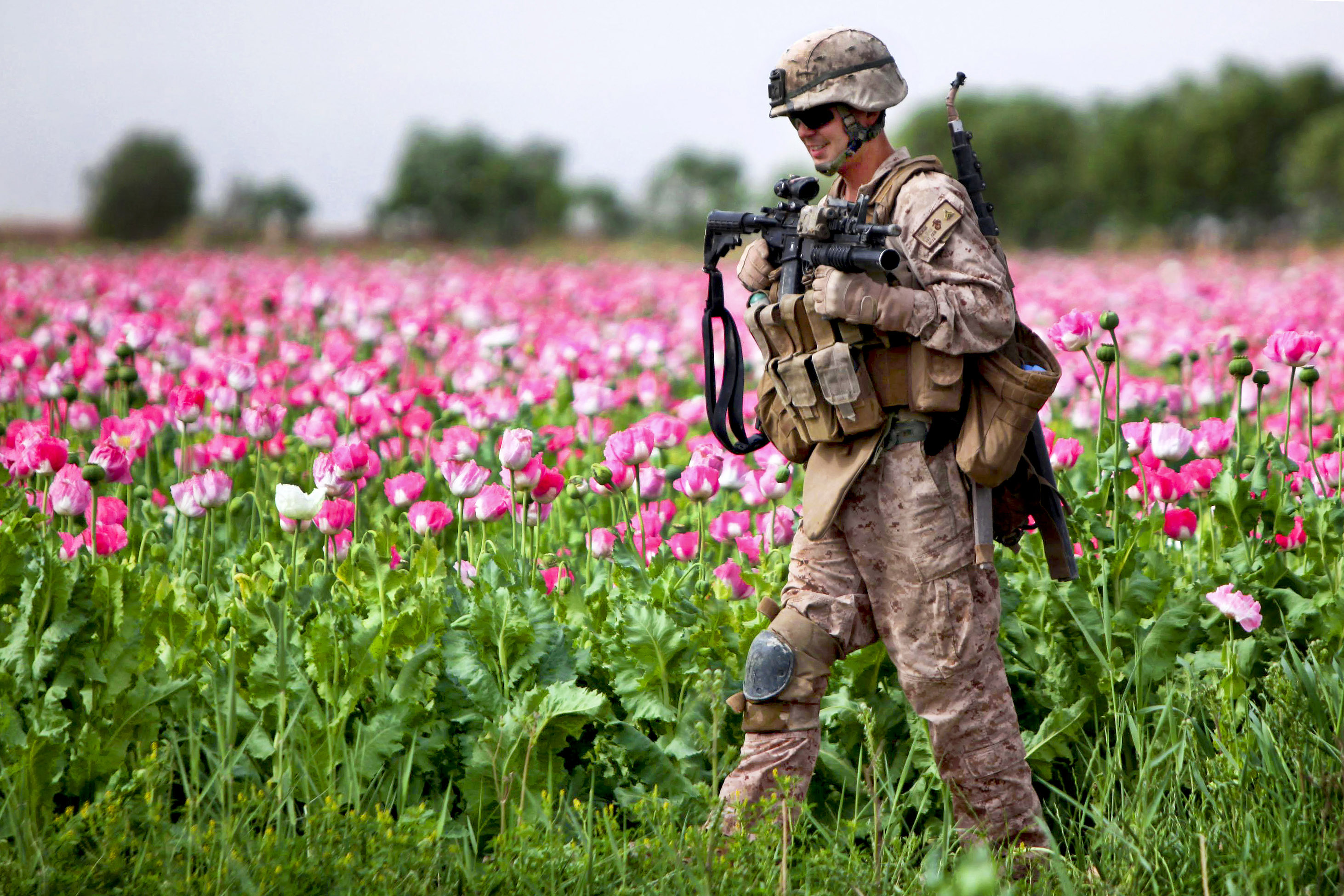 Image result for opium fields