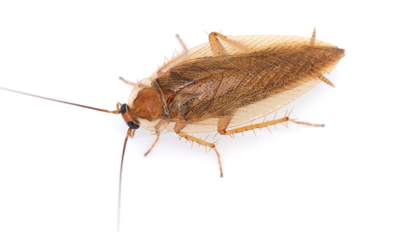 Ist das eine kakerlake oder nur ein harmloser käfer ...