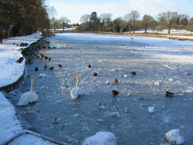 Frozen pool at Abbey Fields - geograph.org.uk - 1651256