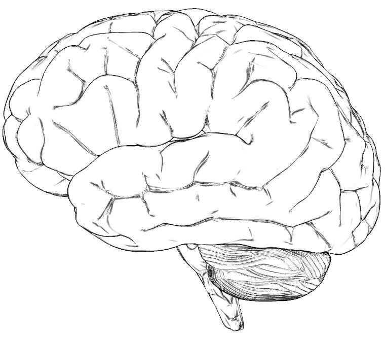 file hersenen png