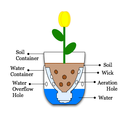 Illustration-Sub-Irrigated Planter from pop bottle