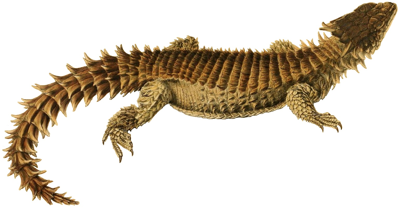 File Illustrations Of The Zoology Of South Africa Smaug Giganteus