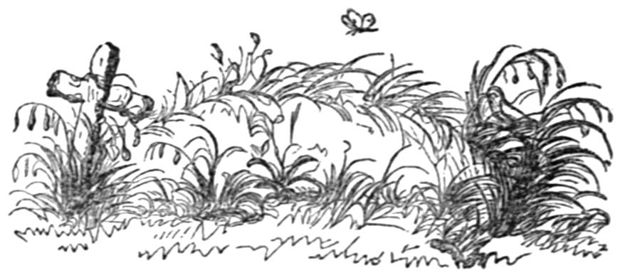 Image - Engraving of grave in garden.jpg