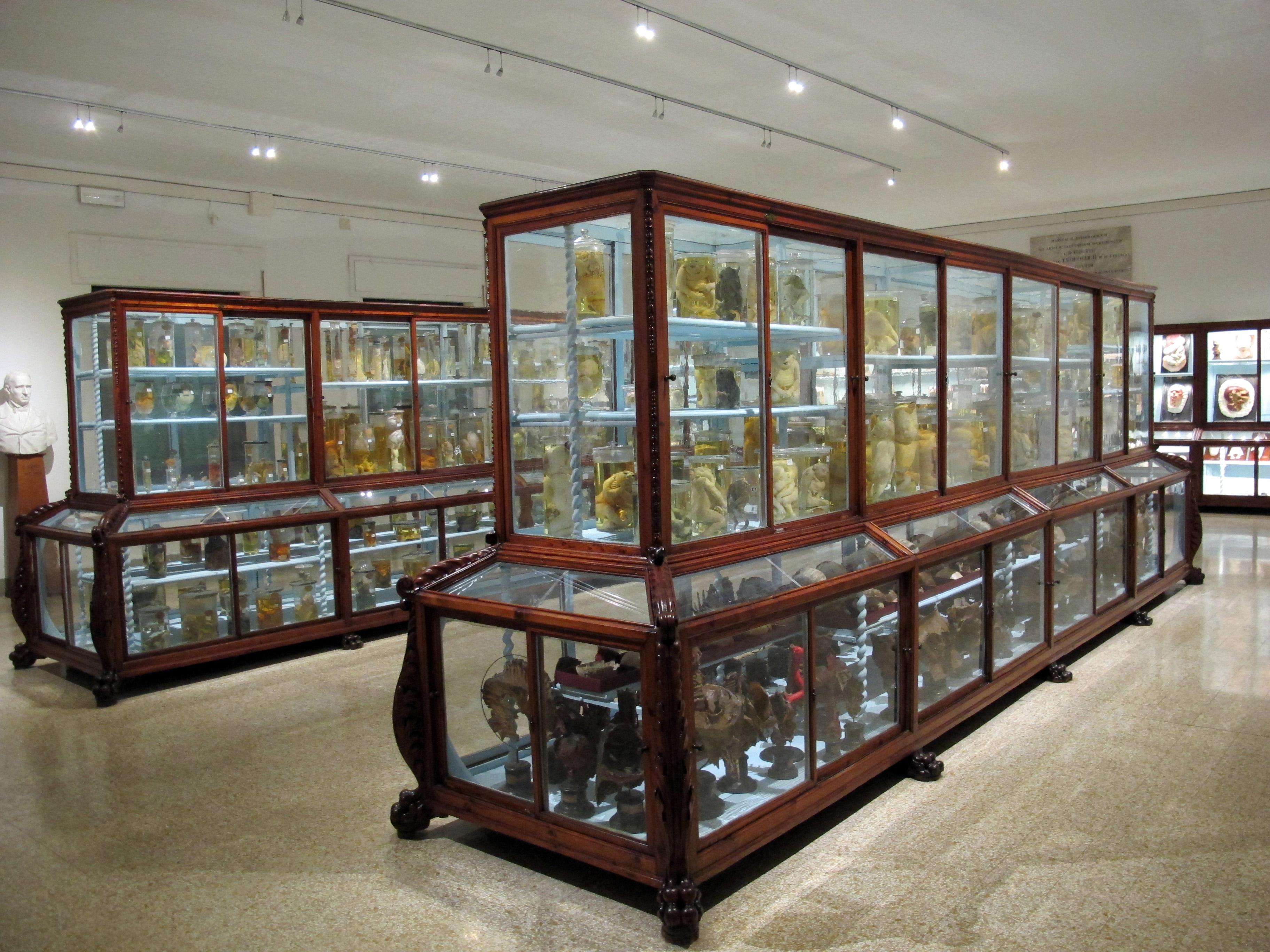 Istituto_di_anatomia_patologica%2C_museo