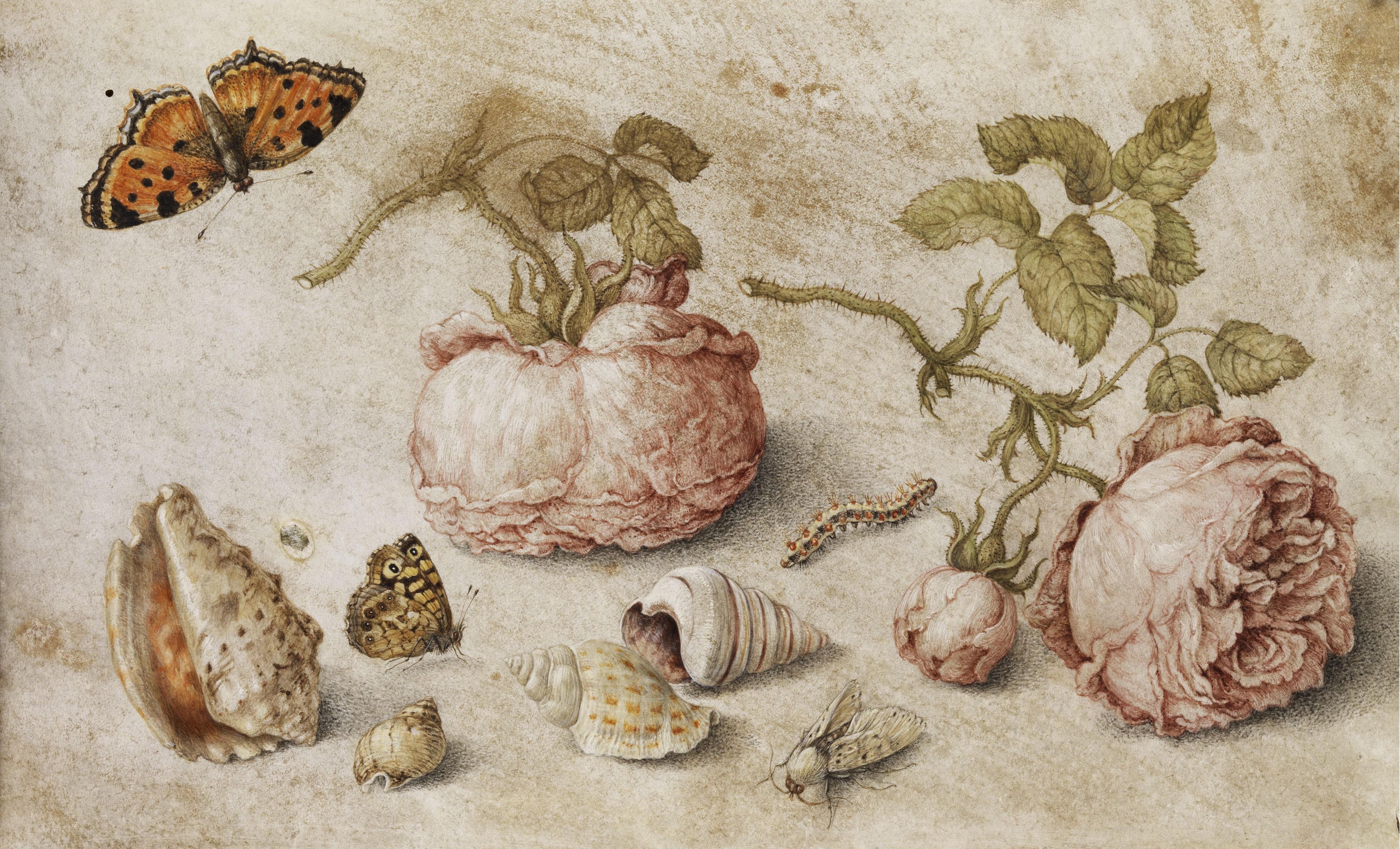 File:Jan van Kessel de Oude - Trompe l\'oeil.jpg - Wikimedia Commons