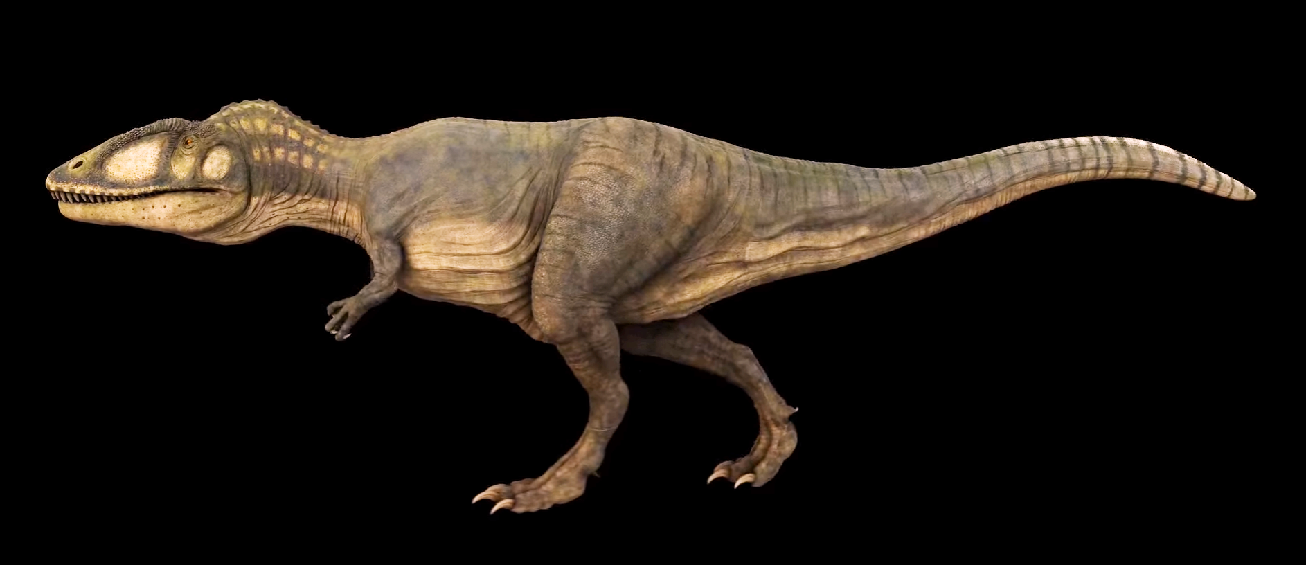 filejulian johnson mortimer carcharodontosaurus 3png