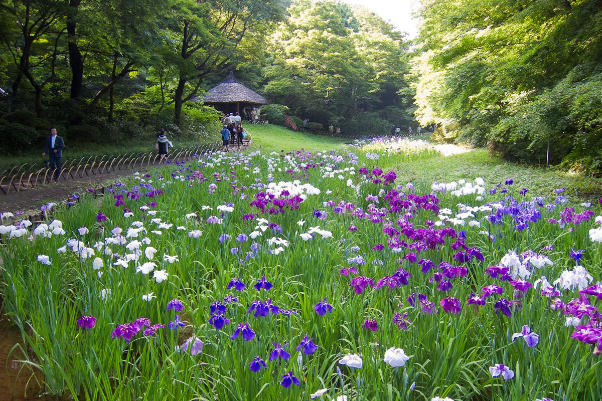 https://upload.wikimedia.org/wikipedia/commons/4/48/Meiji-Shrine-Innergarden-02.jpg?download