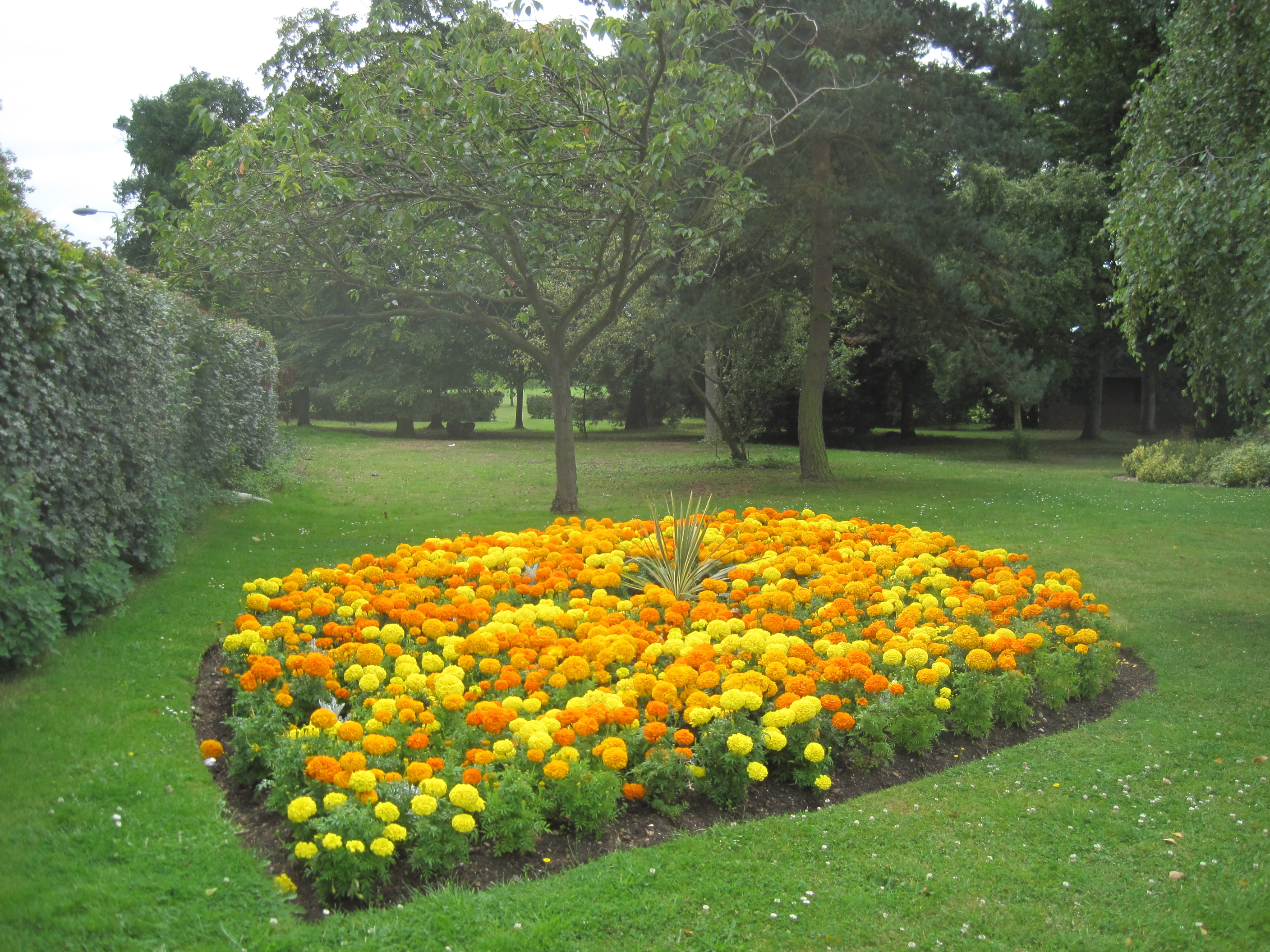 File Mill Hill Park flowerbed 2 JPG