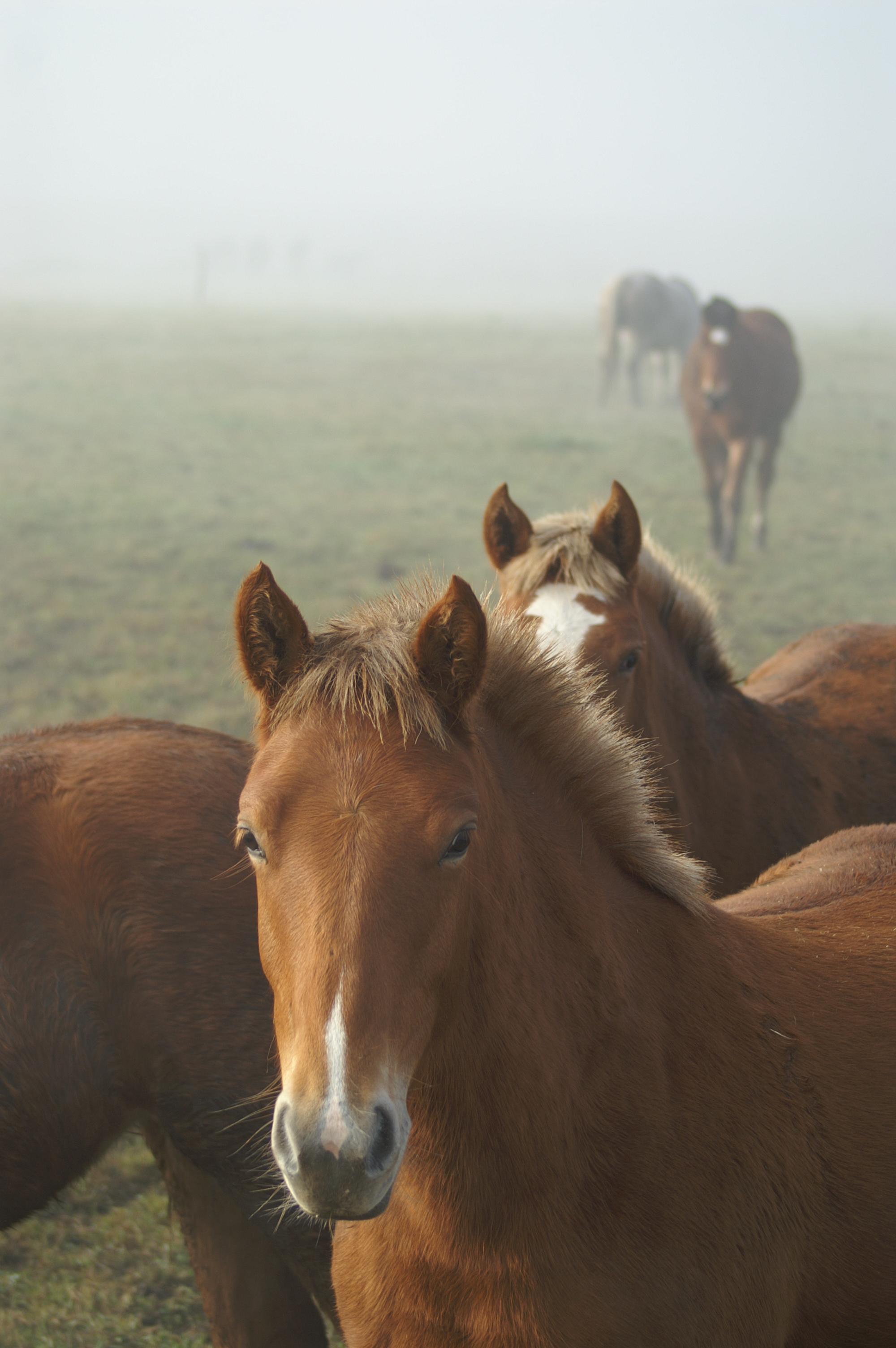 Pferde02.JPG