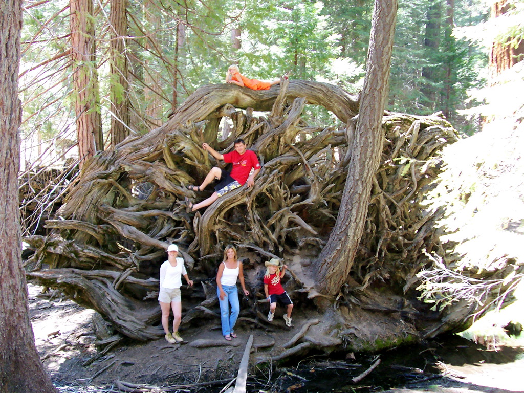 File:The scale of root system on a Giant Sequoia tree.jpg ...