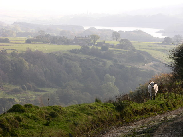 Wayoh Reservoir from The Naze - geograph.org.uk - 591145