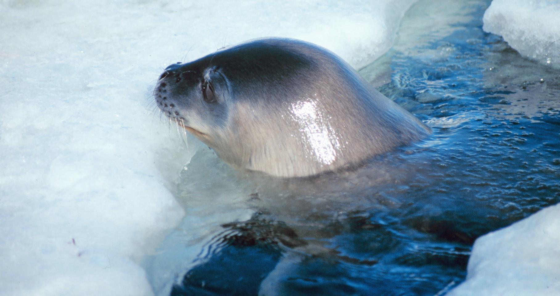 Animais da Antártida
