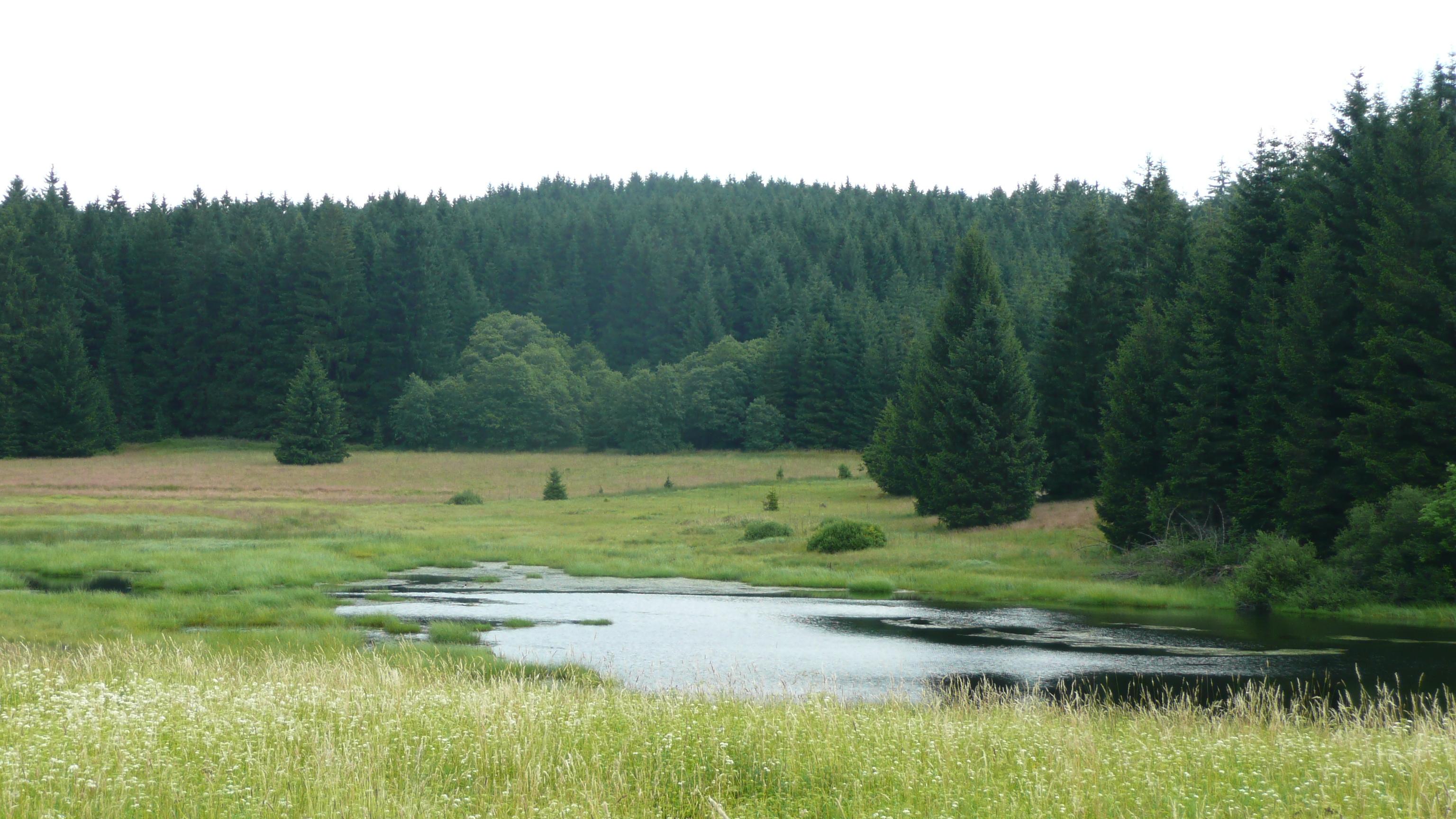 file esk les jezero nedaleko star kn ec huti jpg wikimedia commons. Black Bedroom Furniture Sets. Home Design Ideas