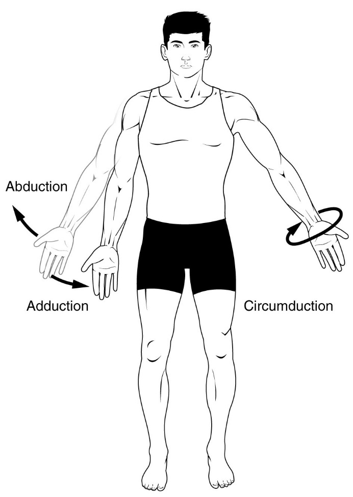 anatomical terms for motion