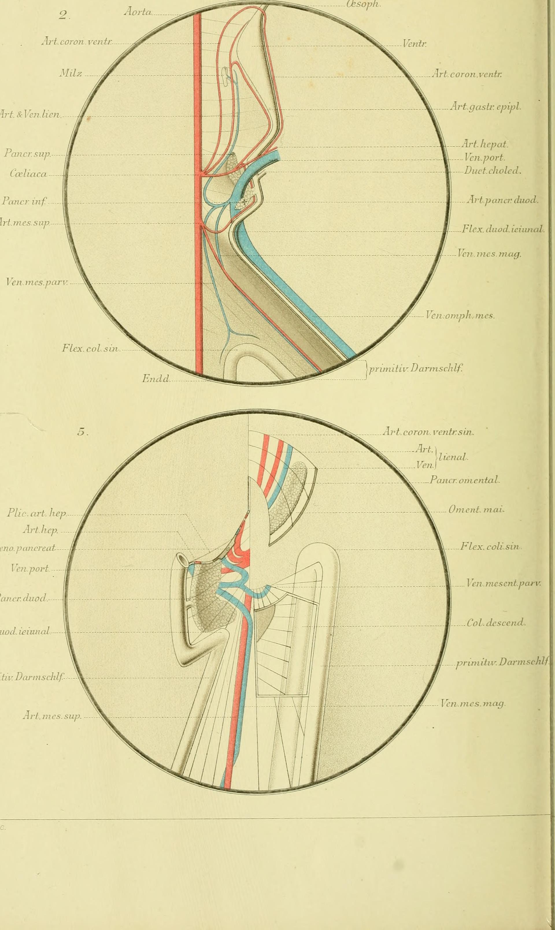 File:Archiv für mikroskopische Anatomie (1892) (20302607166).jpg ...