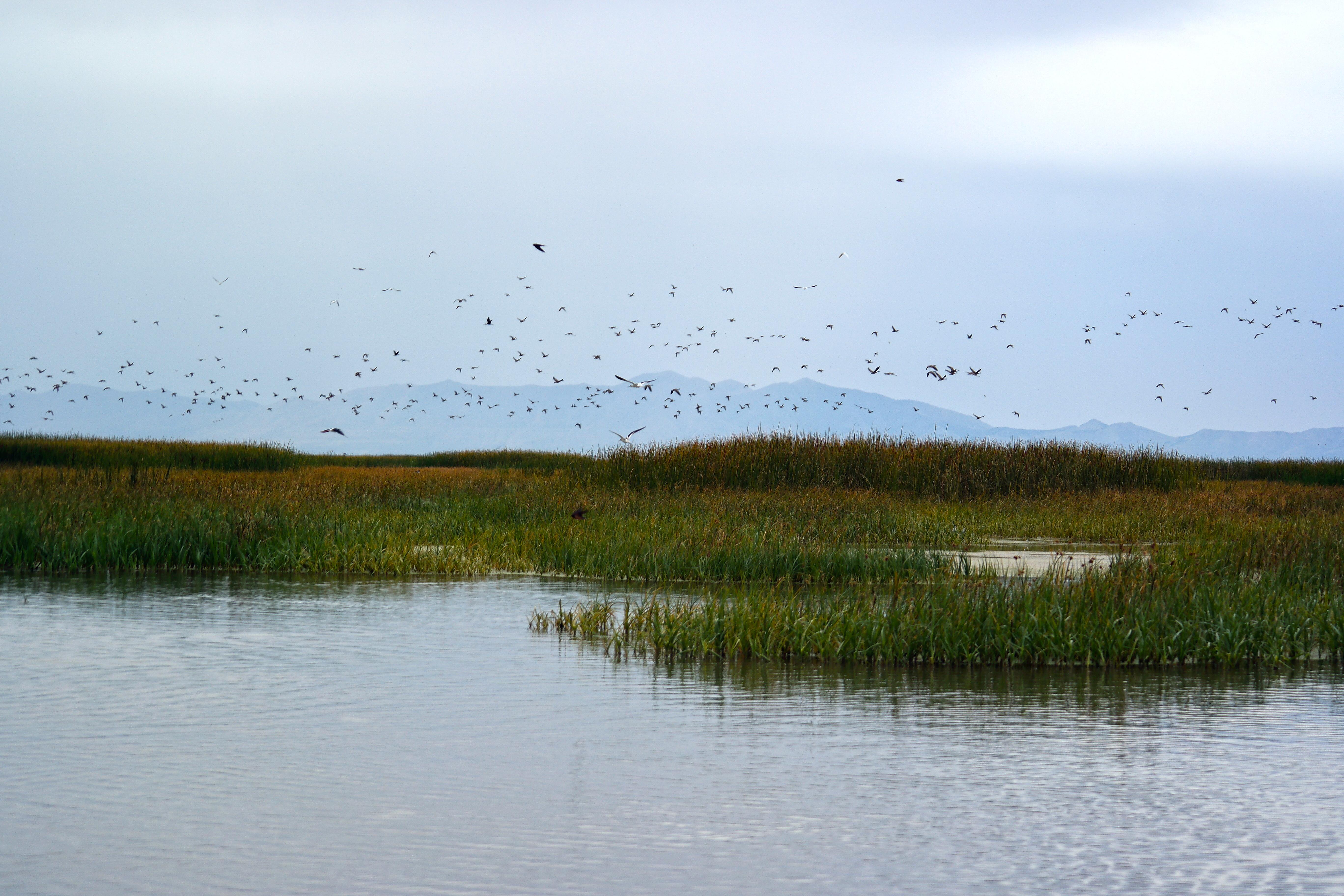 Biden Administration Reinstates Migratory Bird Protections