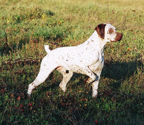 Akc Dog Breed Selector Quiz