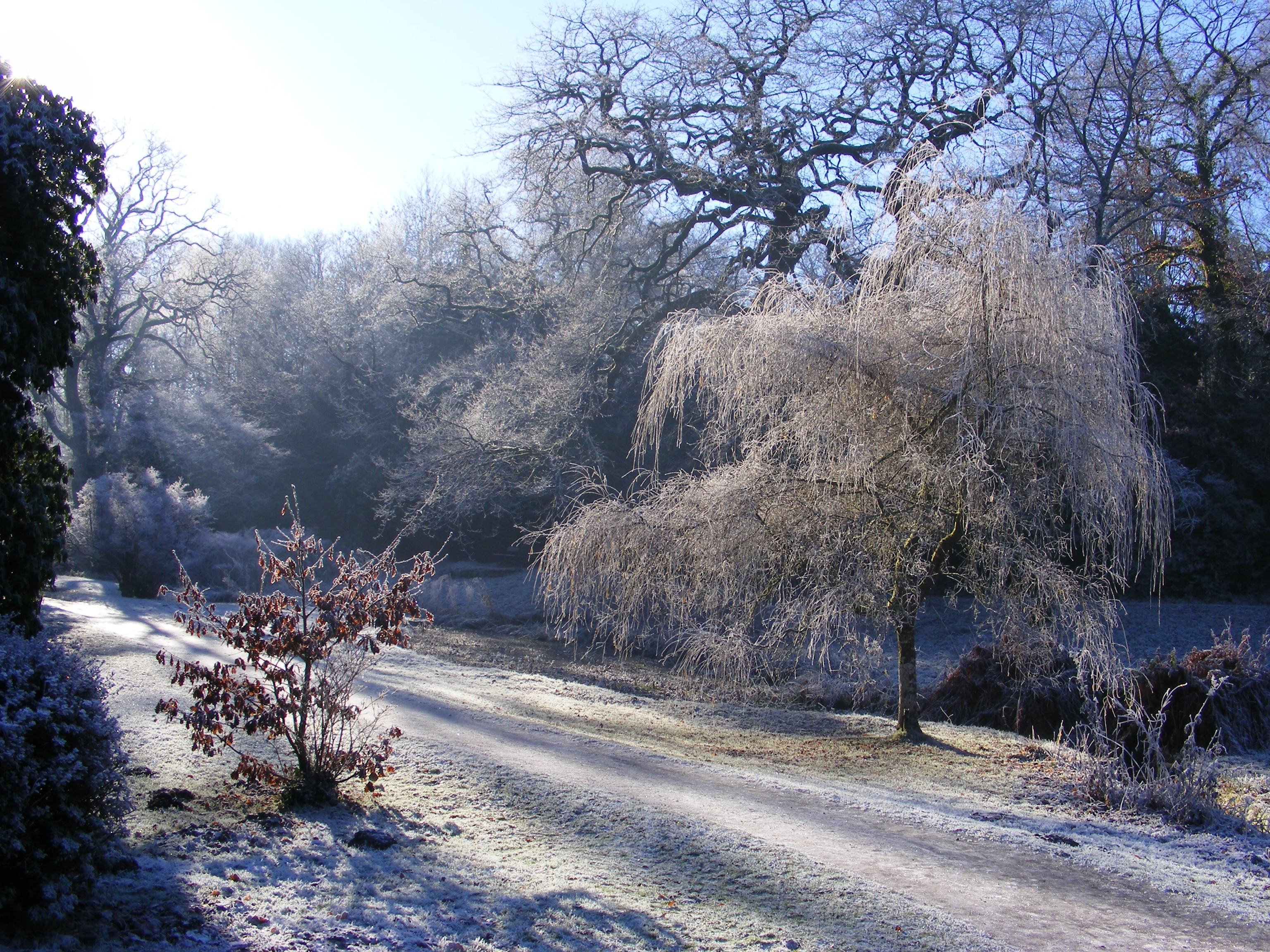 file bryngarw country park japanese garden in frost. Black Bedroom Furniture Sets. Home Design Ideas