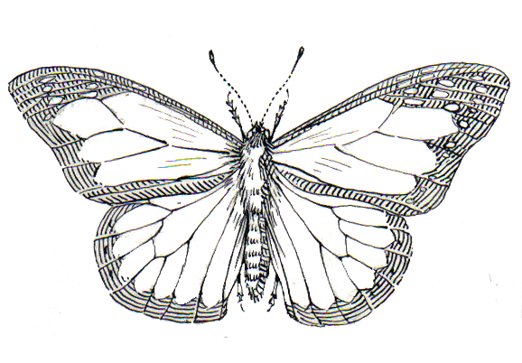 Butterflies Coloring Pages Pinterest