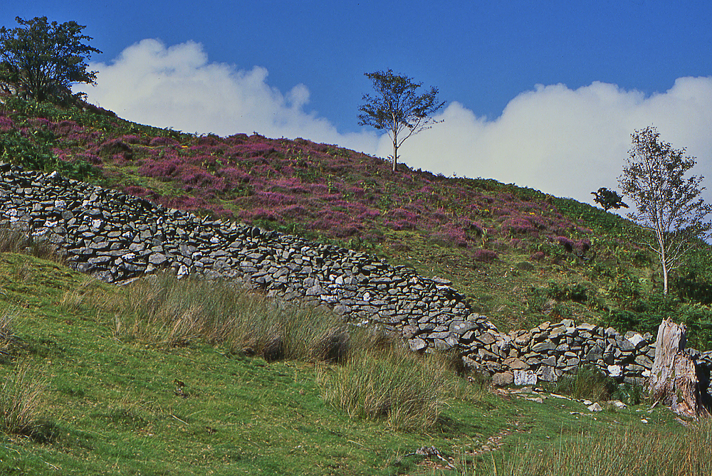 Eastern flanks of Foel Cynwch - geograph.org.uk - 1090703