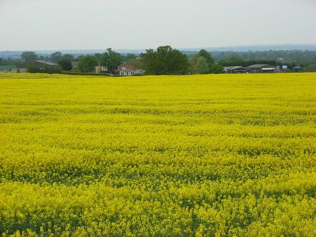File:Farmland, Hawthorn Hill - geograph.org.uk - 799208.jpg