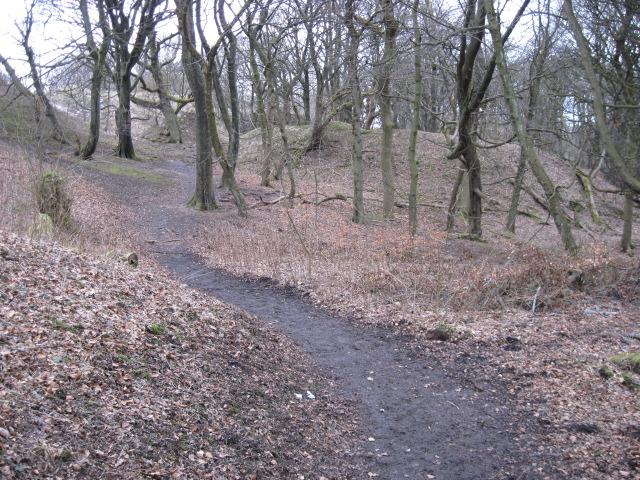 Footpath in Grin Plantation - geograph.org.uk - 1745286