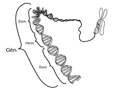 genetikai nézet