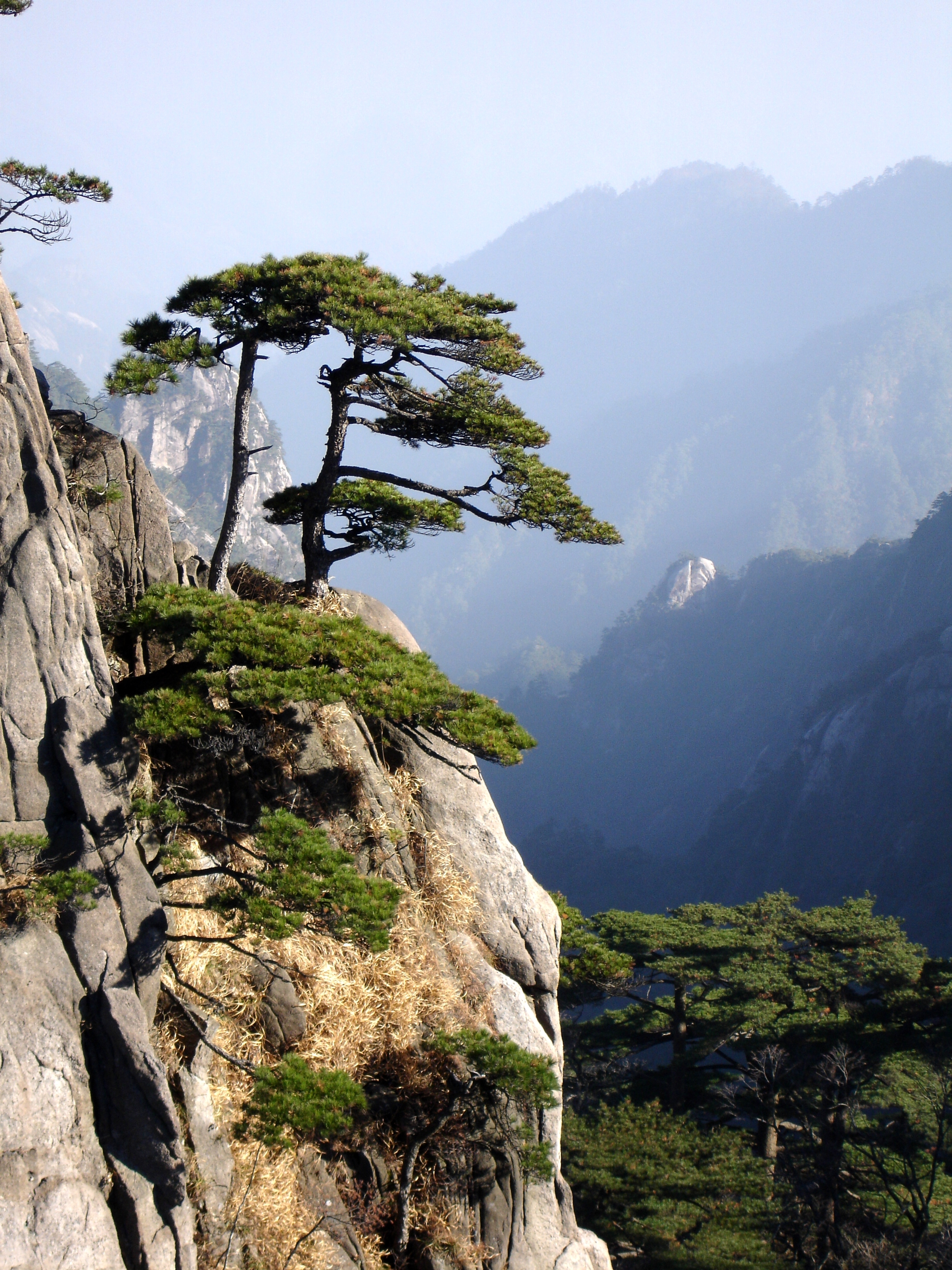 Filehuangshan Mountain Peak Pine Trees Jpg Wikimedia Commons