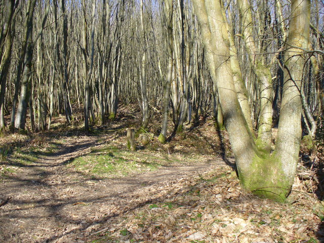 In Hurthill Copse - geograph.org.uk - 683153