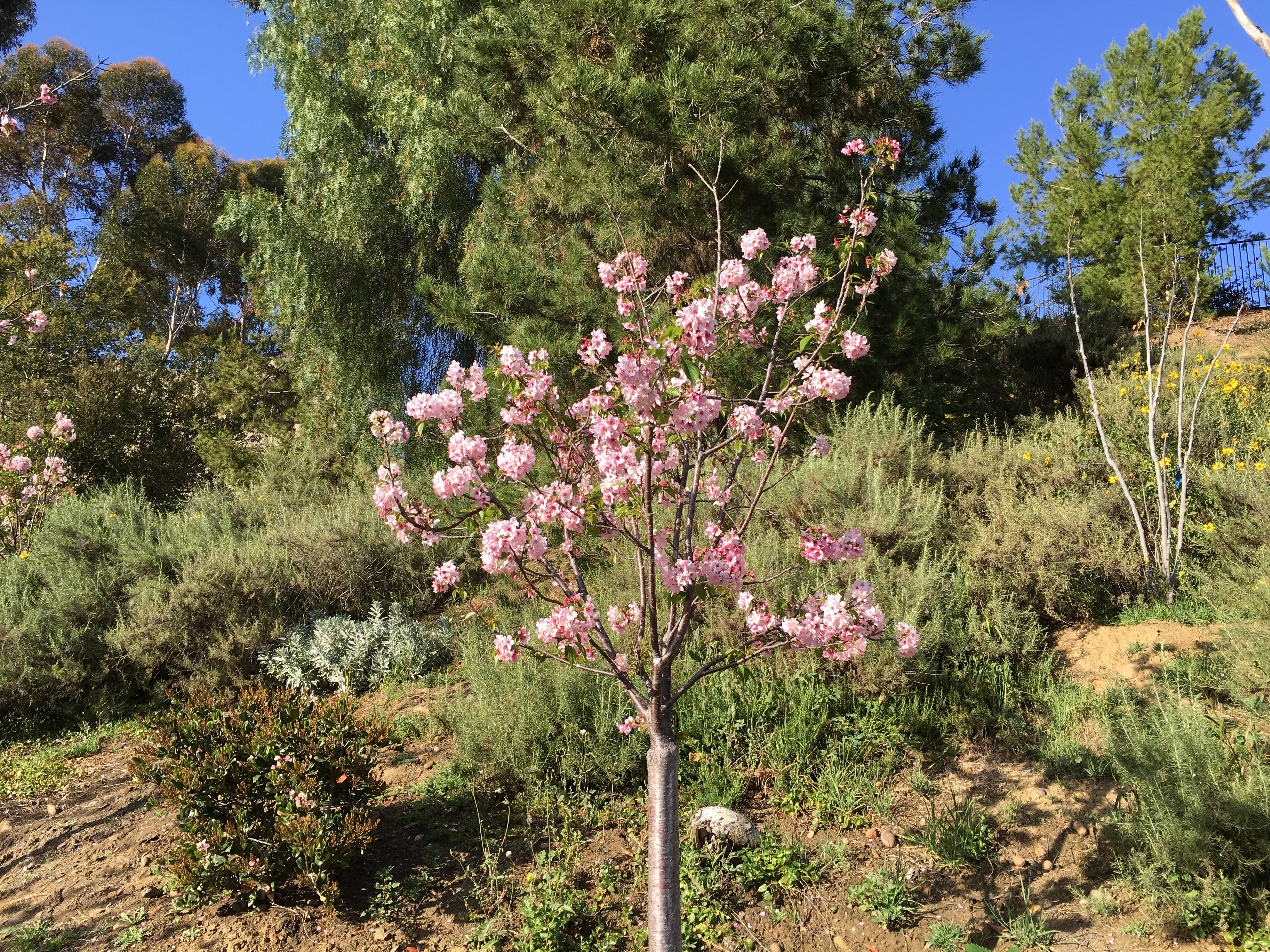 File:Japanese Friendship Garden (Balboa Park, San Diego) 25 2016-05 ...