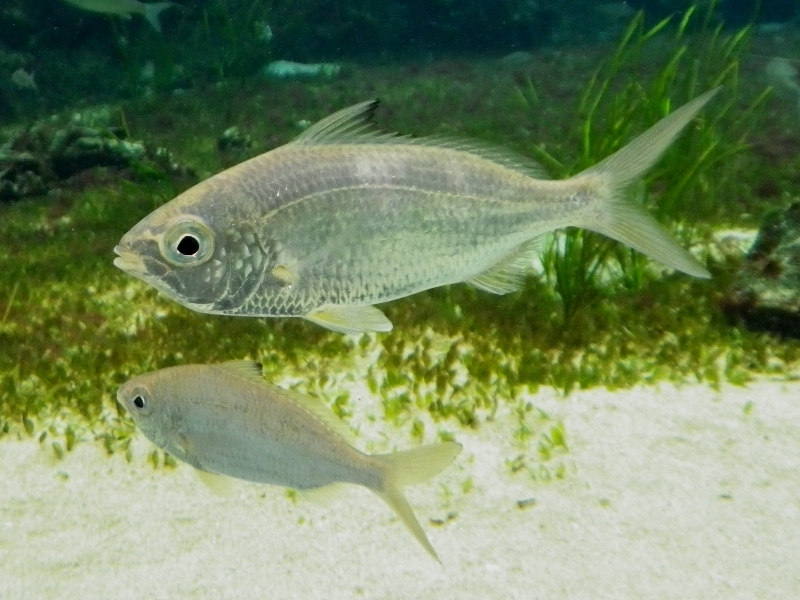 Cichlid Behavior