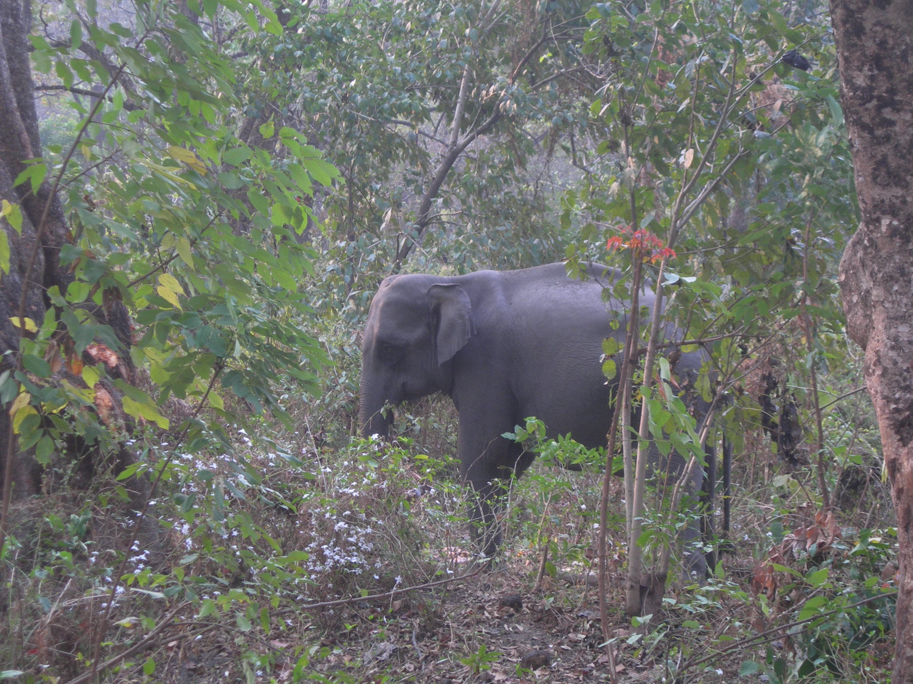 manas national park or manas wildlife sanctuary essay 2) the poaching of rhinos in manas national park is currently under control with the implementation of smart patrolling, increase in forest frontline staff and number of functional.