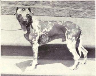 File:Mexican Hairless from 1915.JPG