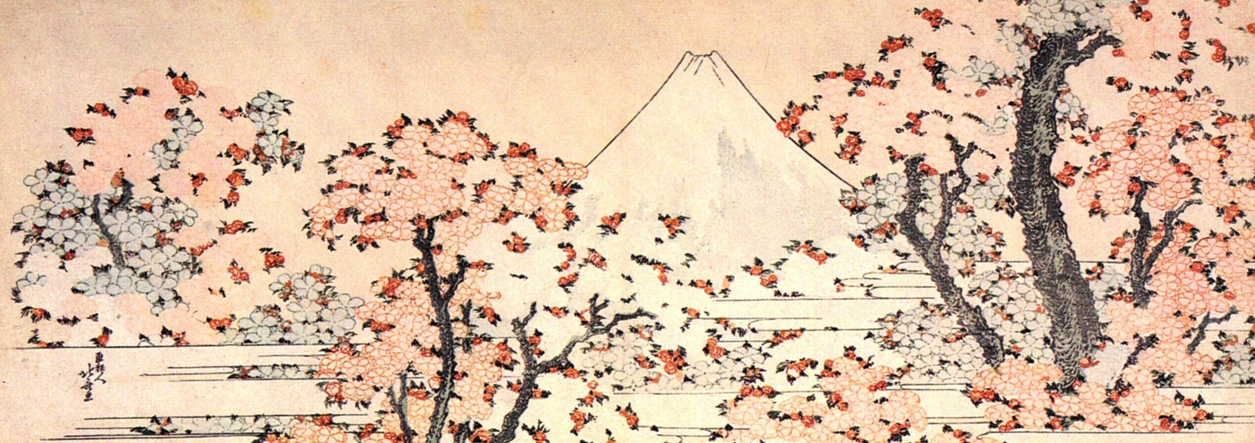 Japanese Cherry Blossom Cake Recipe
