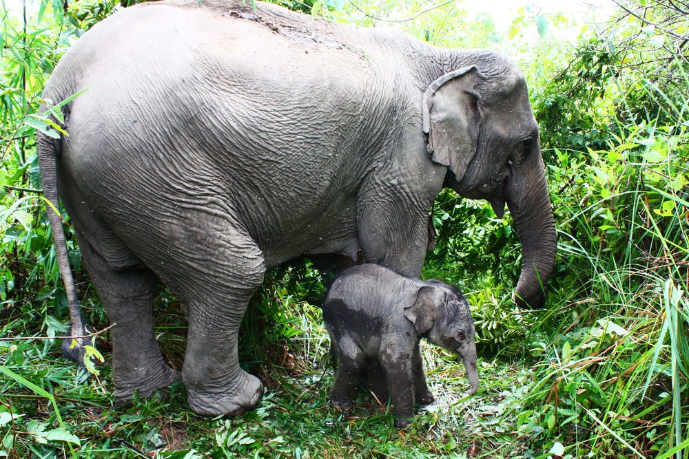 Conservation centres in india