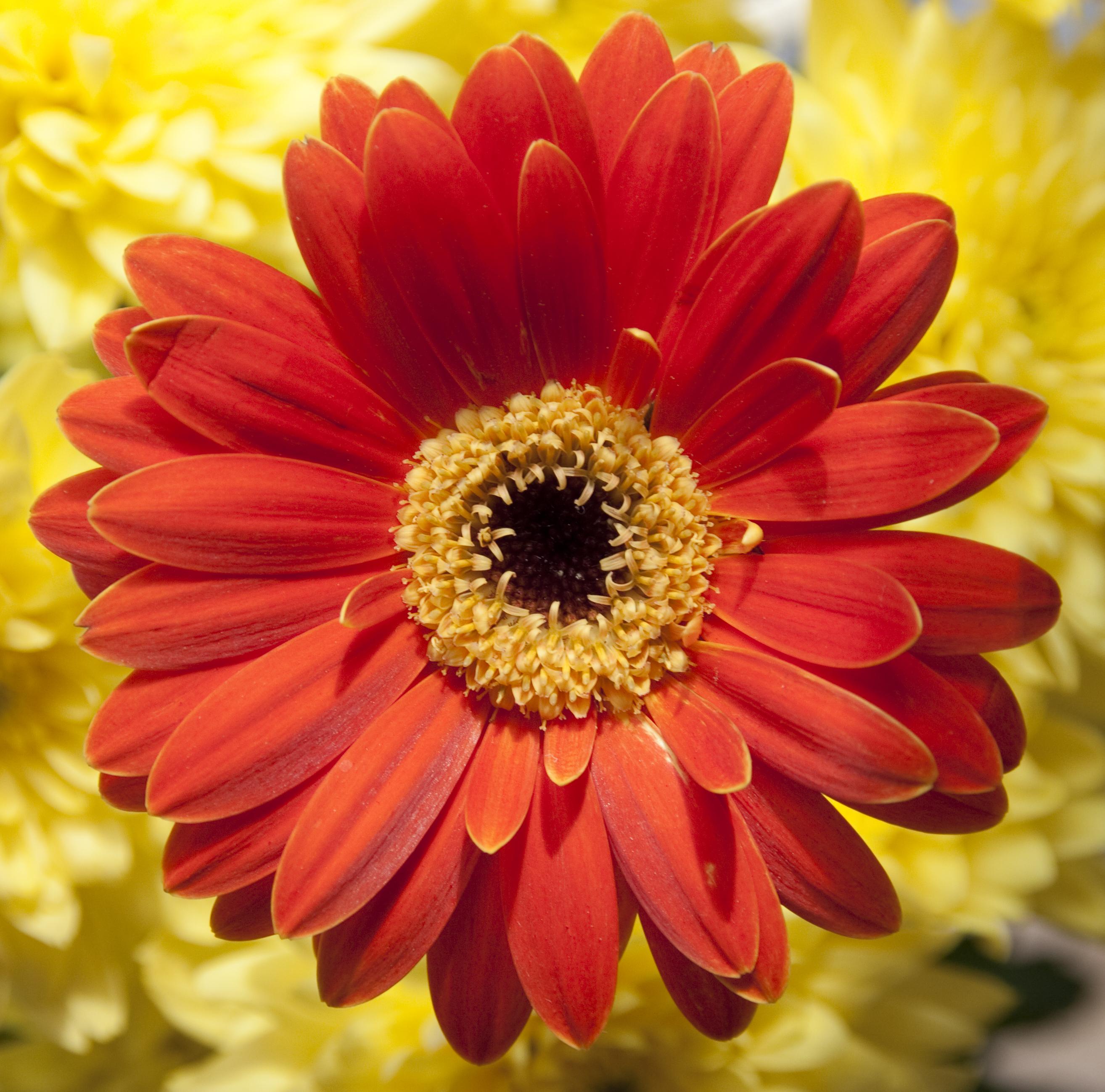 File Orange flower