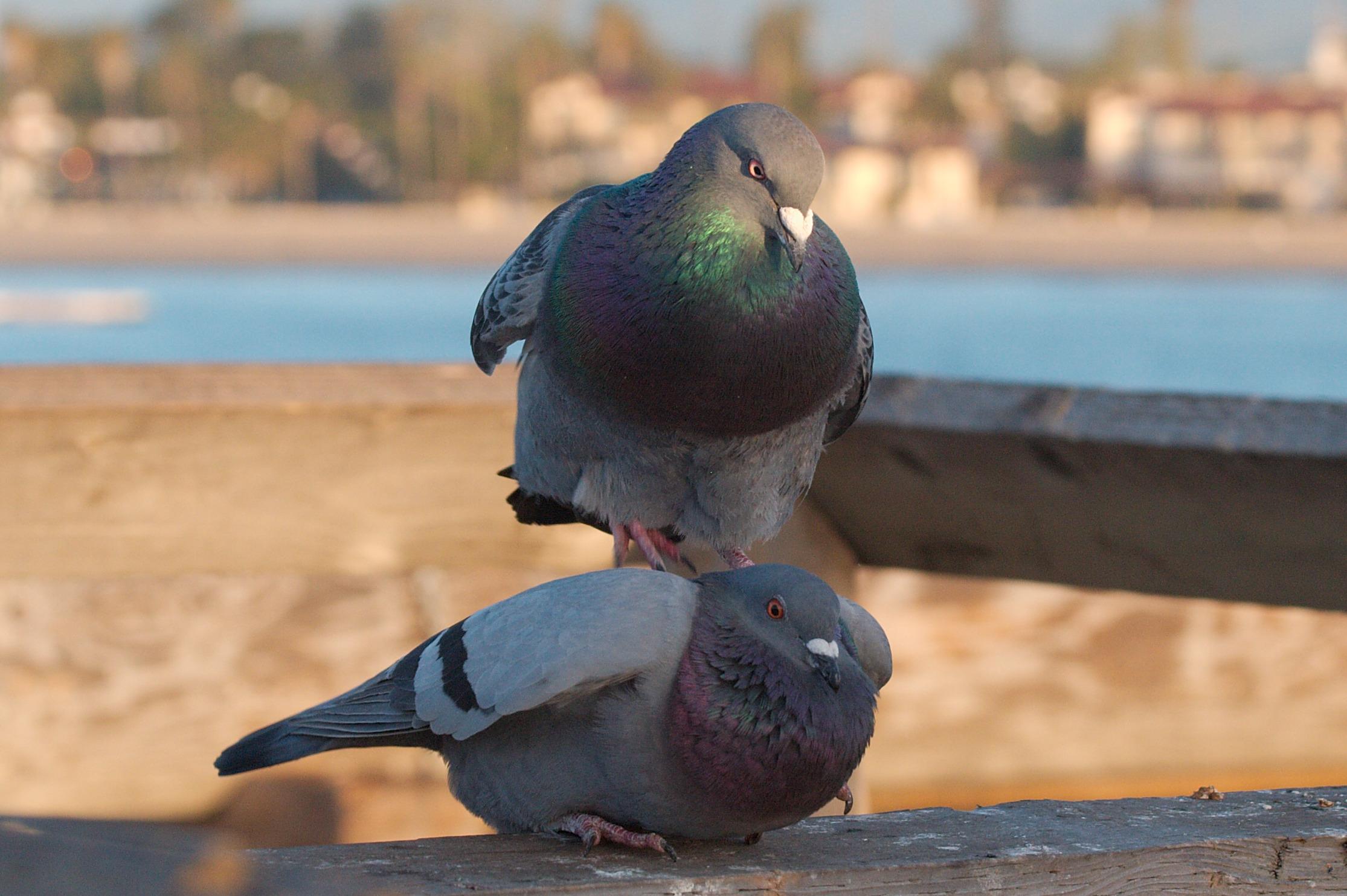 Два голубка трахаются