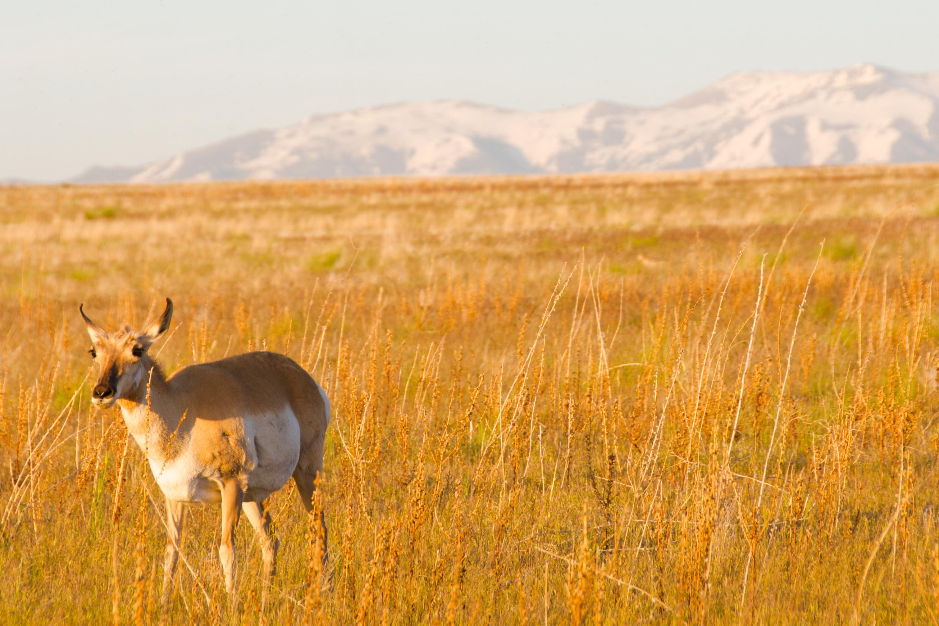 Antelope Island State Park Ut Site Weather Com