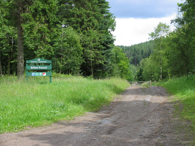Silton Forest - geograph.org.uk - 856672