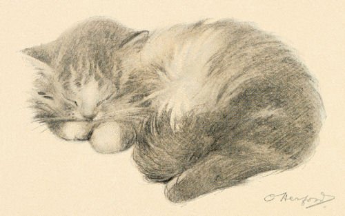 Sleeping Kitty Drawing