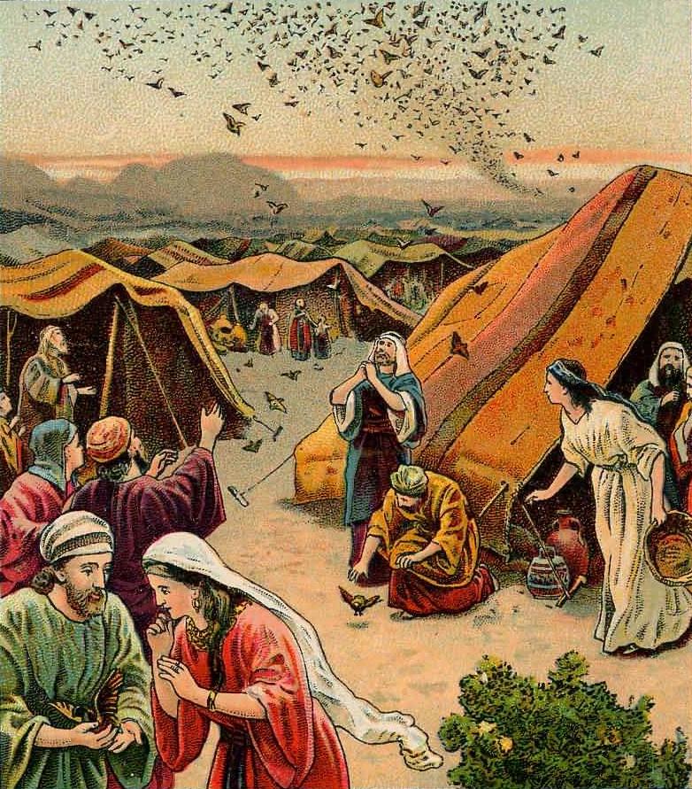 Bildergebnis für exodus 16 quail