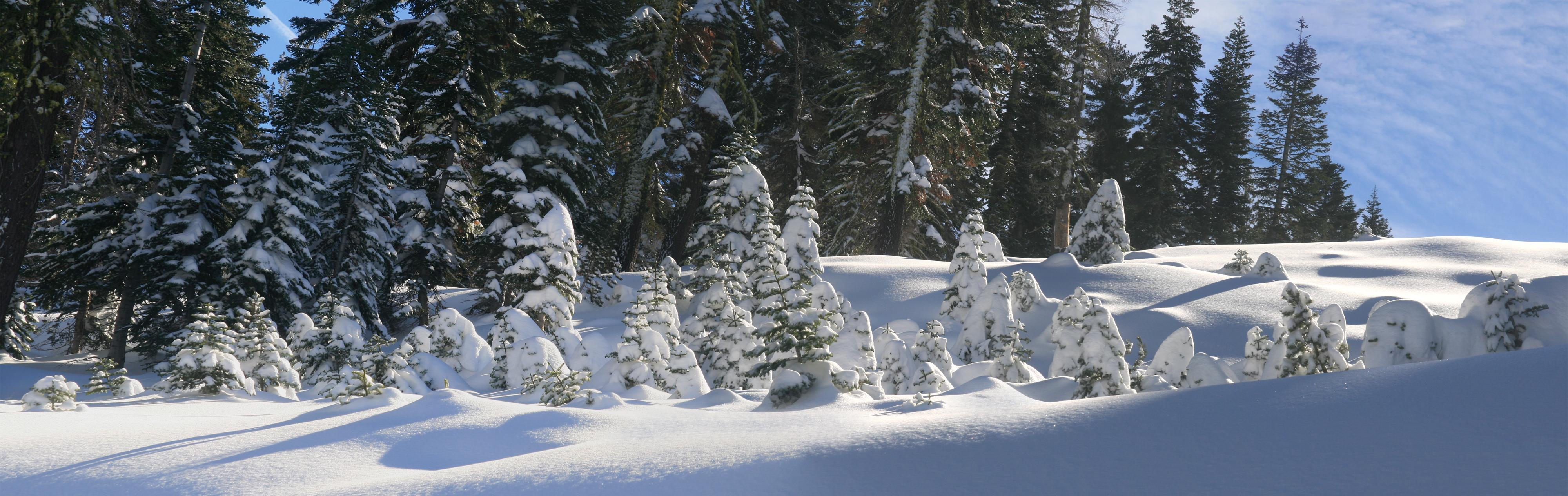 English: Trees covered by snow in Boreal, Cali...